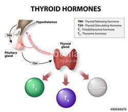 Thyriod Hormone Chart.jpg