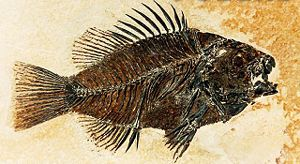 Fossils fish flesh.jpg