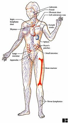 Immune system - CreationWiki, the encyclopedia of creation science