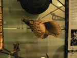 Conch Anatomy | RM.