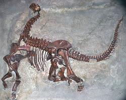 Sauropod Skeleton.jpg