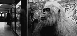 Gigantopithecus3 jpgGigantopithecus Giganteus