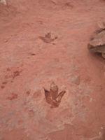 Dino tracks.jpg