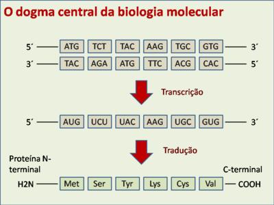 Modelo celular biologia