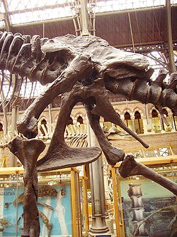 Tyrannosaurus pelvis.jpg