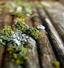 Green lichen.jpg