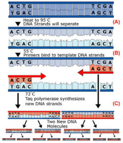 an analysis of the research of cloning a process of creation of one organism using the dna of anothe Cloning can also be used for other purposes besides producing the genetic twin of another organism different fragment of interest from one organism to a self-replicating genetic element of interest is isolated from chromosomal dna using restriction enzymes.