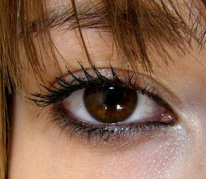 http://creationwiki.org/pool/images/thumb/9/9a/Brown_eyes.jpg/300px-Brown_eyes.jpg