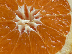 JUICY!!!!!!! ohhh Citrus Sinensis.jpg
