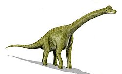 Brachiosaurus.jpg