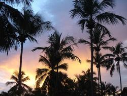 Coconuttreeandsunset.jpg