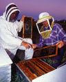Honey bee harvest.jpg