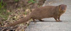 Mongooseroad.jpg
