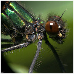 Close Up Of Damselfly.jpg