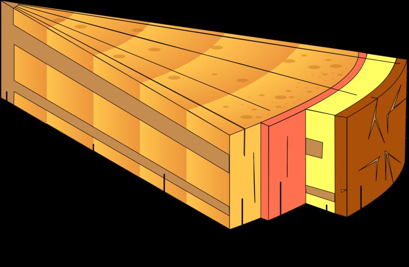 File:Stem cross section diagram.png