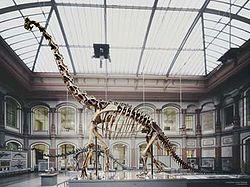 Brachiosaurus skeleton.jpg