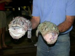 Anglers.jpg