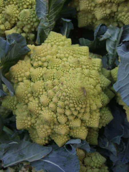 File:Cauliflower fibonacci sequence.jpg