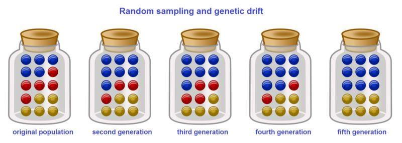 File:Genetic drift.png