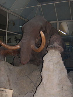 Stuffed mammoth.jpg