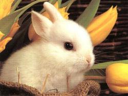 Cute rabbit 1.jpg