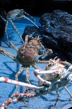 King Crab 1.jpg
