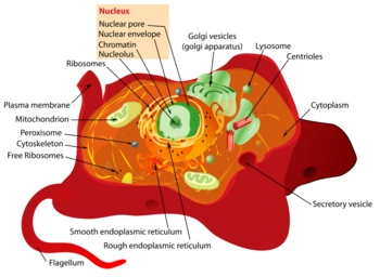 Cell    biology  CreationWiki  the encyclopedia of creation