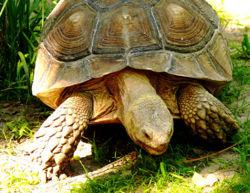 Tortoise 5.jpg