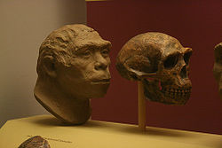 Peking Man Creationwiki The Encyclopedia Of Creation