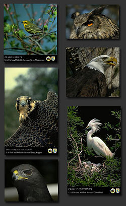 Bird collage.jpg