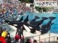 Killer whales.jpg