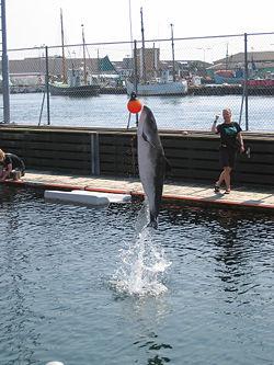 Jumping Porpoise.jpg