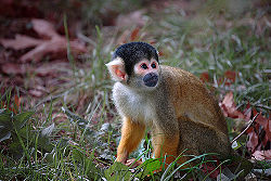Little monkey...jpg