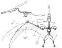 Pteronodon2.jpg