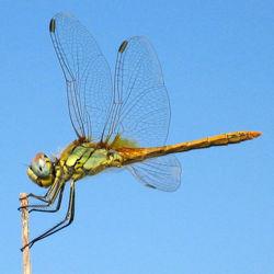 Dragonfly 5.jpg