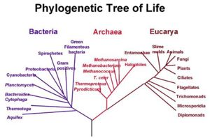 Gene tree discordance, phylogenetic inference and the ...