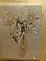 Reputed transitionals Archaeopteryx Not A Transitional Form