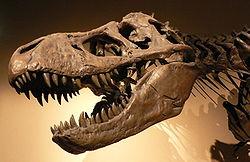 Tyrannosaurus rex .jpg