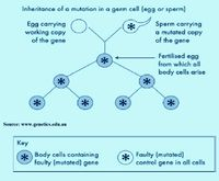 Mutation-sperm-egg.jpg