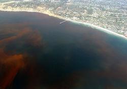 Red tide shore 2.jpg