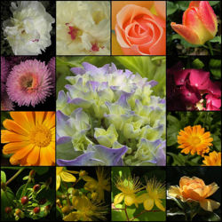 All kinds of flowers.jpg