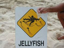 Box jellyfish warning.jpg