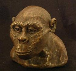 Austrolopithecus africanus.jpg