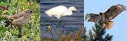 Bird banner.jpg