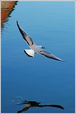 Seagull 5.jpg