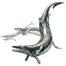 600px-Basilosaurus.jpg