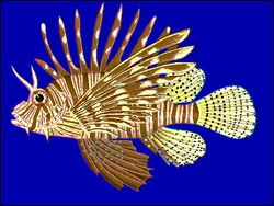 Lionfishdrawing.jpg