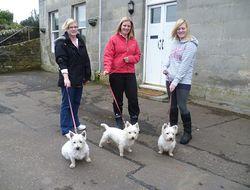 West Highland Terriers.JPG