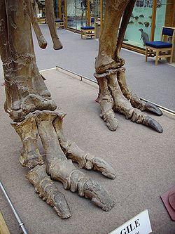 Iguanodon feet.JPG